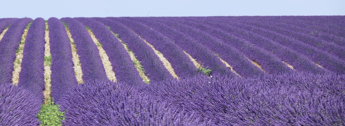La Provence s'invite en Beauce